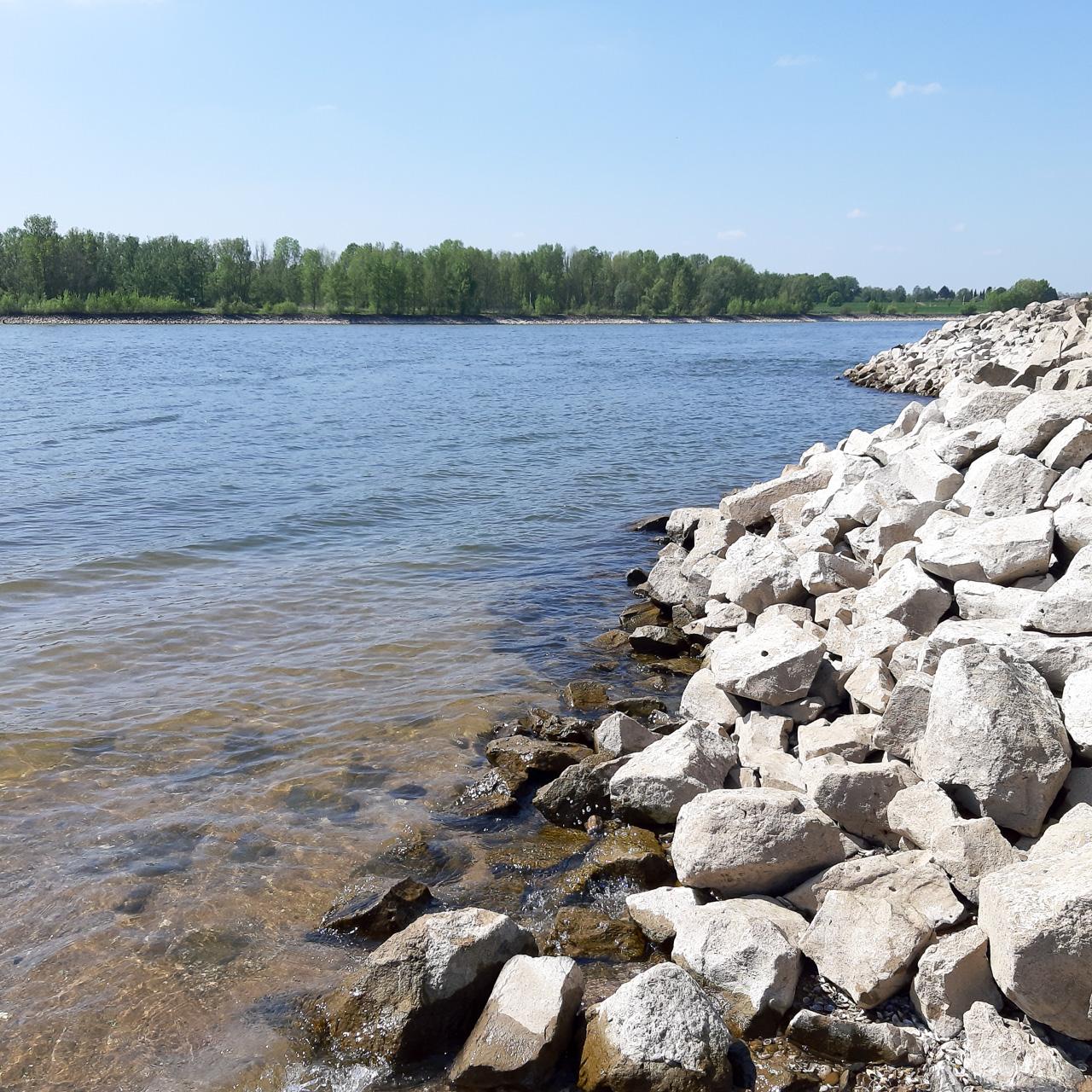 Am Rhein bei Wesel Bisslich